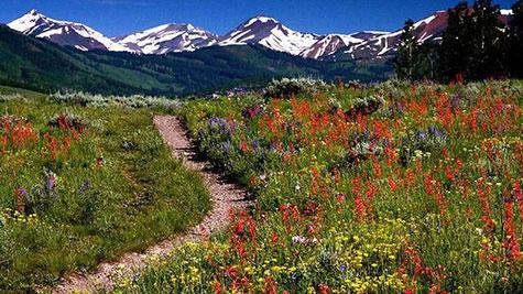 Aspen USA